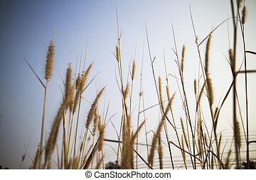 grass steppe grass against
