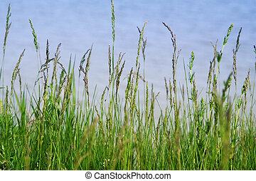 Grass above a precipice, a kind on the sea