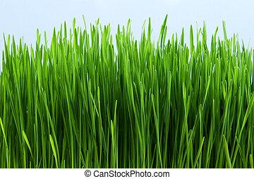 Grass - Green grass against sky background