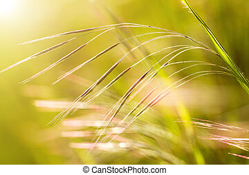 Grass - Beautiful, harmonious picture from a blade of grass