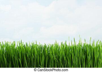 Grass against sky