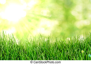 Grass natual background
