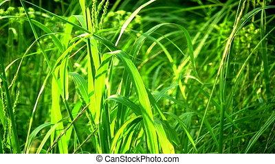 Grass - Close-up of green grass