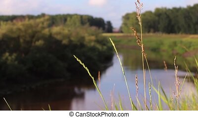 grass sways in the wind on a background of water