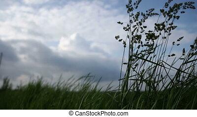 Grass swinging in the wind