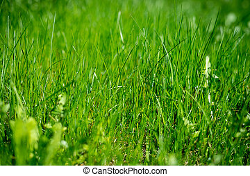 grass., texture, champ, fond, herbe, concept., meadow., environment., vert, protection, environnement, protéger