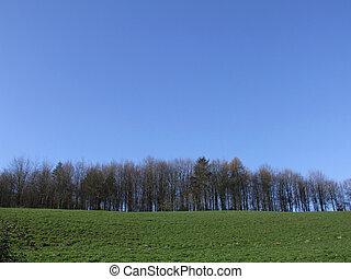 Grass Trees Sky