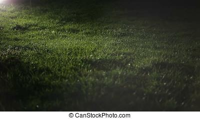 Grass Turf at Night - Grass at night. Artificial light....