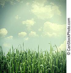 Grass under blue sky