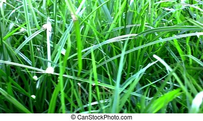 Grass under sunshine. Shift macro