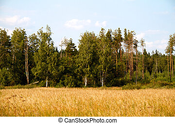 grass valley in forest during summer
