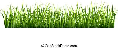 Grass - Vector illustration green grass on a white...
