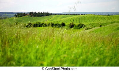 grass waves on a wind, Tuscany, Italy