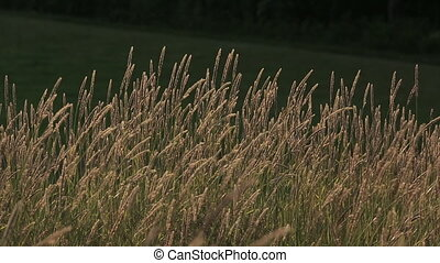 Grass Wind Sun Evening Summer Hay