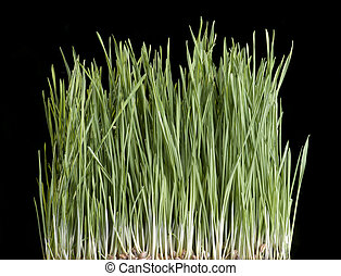 Grass with black background