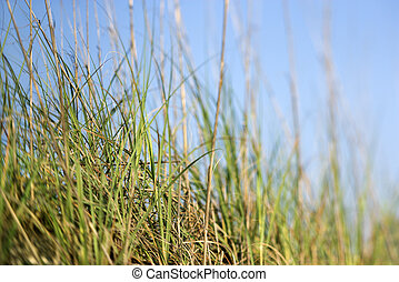 Grass with blue sky.