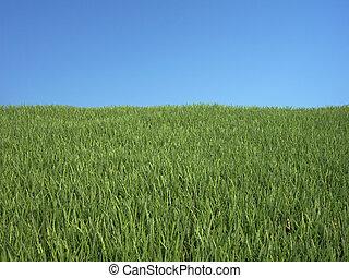 Grass with blue sky