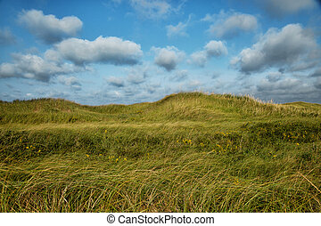 Grass with cloudy blue sky in background