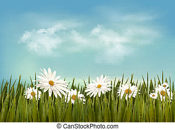 Grass with daisies under blue sky. Retro background. Vector.