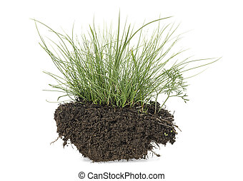 Grass with dirt isolated on a white background
