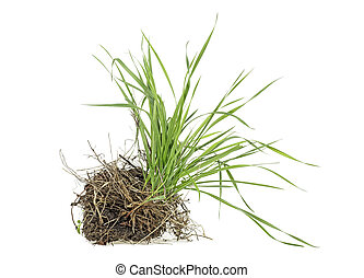 Grass with dirt isolated on white background