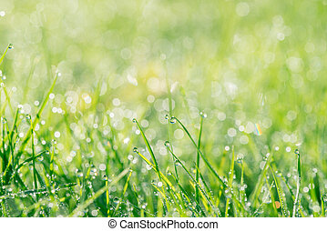 Grass with droplets in the sun