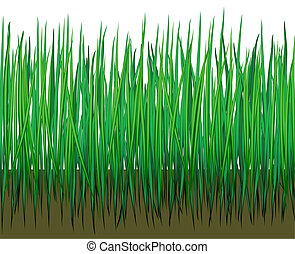 Grass with earth