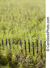 Grass with fence.