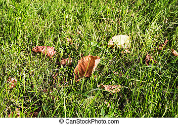 grass with leaves