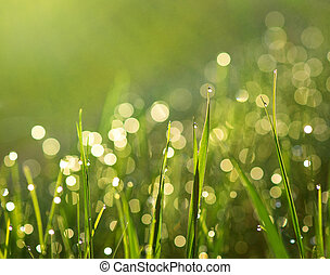 Grass with rain drops - Close up of green grass in sunshine ...