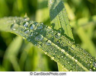 grass with raindrops