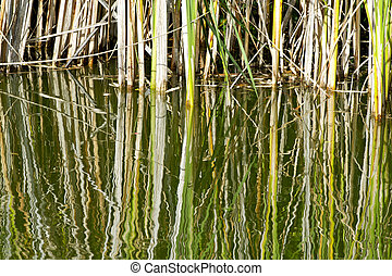 grass  with reflection in water
