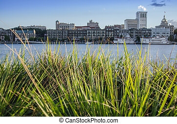 Green grasses with the Savannah riverfront blurred in the background