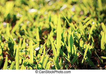 Grass with sunlight.
