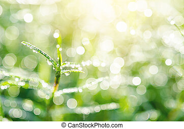 Grass with water drops.