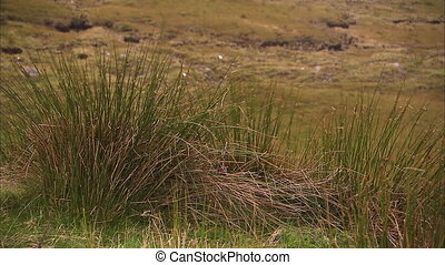 Grass with winds shot