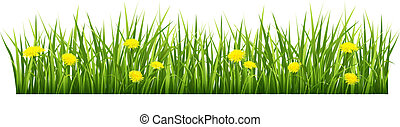 Vector illustration of green grass with yellow flowers on a white background