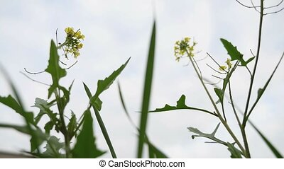 grass with yellow flowers view from below against a gray sky...