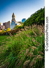Grasses and the Custom House Tower in Boston, Massachusetts.