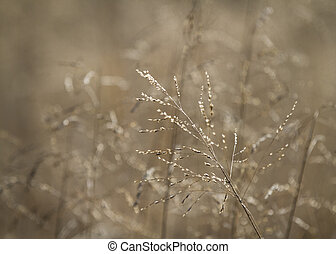 Grasses background, fall or winter