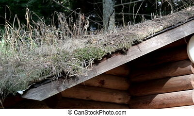 Grasses growing on the roof of the cabin log