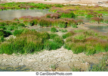 Grasses near Mud volcano