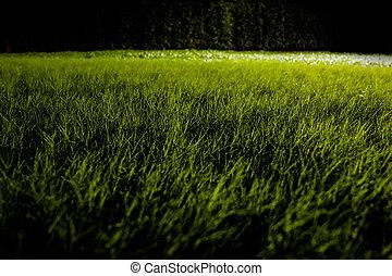 Grasses on the ground in the dark night garden with spotlight light.