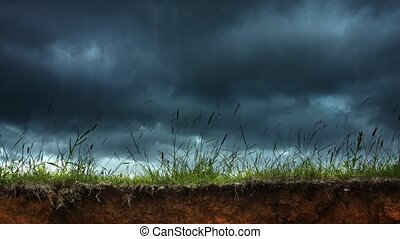 Grasses Stirring in and Rain of a Thunderstorm - Wild ...