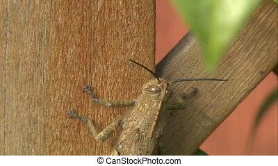 grasshopper 04