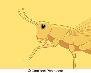 Grasshopper Closeup Vector Illustration