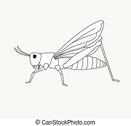 Grasshopper Drawing Vector Illustration
