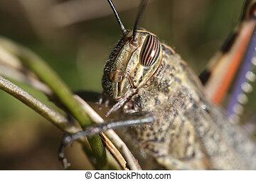 Grasshopper head macro - Detailed grasshopper head macro....