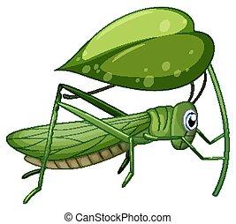 Grasshopper holding leave on white background