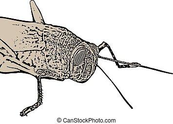 grasshopper illustration design - Creative design of...